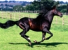 kotenka_m: (лошадь)