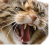 grizetka: (angrycat)