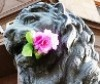 sizif: (lion with flower)