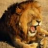 sizif: (sleepy/angry)
