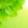 virescence: An image of new, green leaves shown on a lighter green background. (Default)