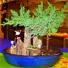 create_destiny: (Bonsai)