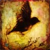 create_destiny: (blackbird)