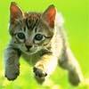 bluedog: (Flying Kitten)