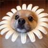 bluedog: (FlowerDog) (Default)