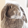 chocolat: (bunny)