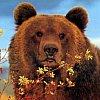 grizzlyzone: (- Clock)