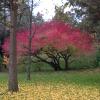 enevarim: (autumn-leaves)
