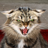 milarka: (angry cat)