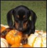 happydog1960: (pumpkin-pup)