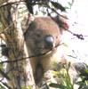mkay422: (coala)