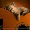 kostao: (Сплю на гитаре)