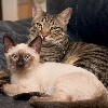 eugo: (кошки)