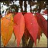 calissa: (Autumn)