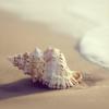 nonamekiwi: (shell)