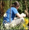 sandra_lindsey: me sitting in the garden with daffodils (musketeer 2)