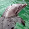 egle: (Dolphin)