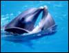 dolphin_girl: ()