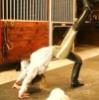gingerbeau: The bridge/leg up (Leg up)