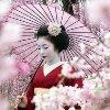 llevelin: (Sakura)