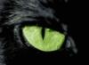 irina_gatta: (котяра черный)