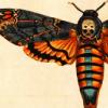 ramonaforever: Moth (moth)