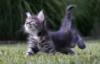 nastyacat: (Летний восторг) (Default)