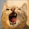 nastyacat: (И еще один кошак от gitanes_)