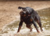 inveraray: (wasserhund)