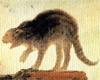 neirfy: (gato)