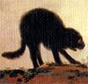 neirfy: (gato2)