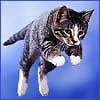 taller: (blue_cat)