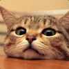 houppe: (catderp)