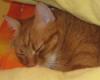 scarlett_i_72: (кот)