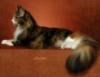 inka424: (cat)