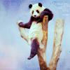 nonfranca: (panda)
