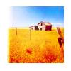 nonfranca: (farm)