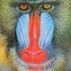 dadadadio: (colorful)