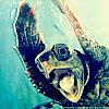 xdawnfirex: (Random - Woo Hoo Turtle)