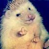rainne: (Random - Eff You Hedgehog)