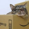 misbegotten: Cats like boxes (Animal Cat in a Box)