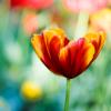 mitricherry: цветок (pic#911213)