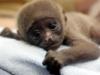 kiwi_waksa: (monkey)