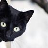 psihicheskaya: (кошка)