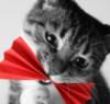 ria9: (Kot)