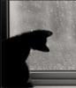 kotvaska16: (кошка черная и дождь)
