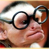 froken_bock: (monkey)