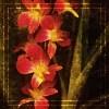 splitbeak: (Misc - Blossum)