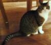 cotya: (Алиса кошка)