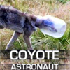 bodlon: It's a coyote astronaut! (Default)